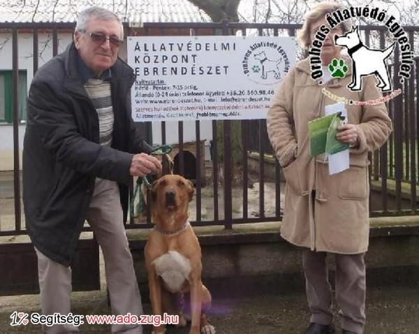 Állatmentés: Megmentettük Bundás kutyát!