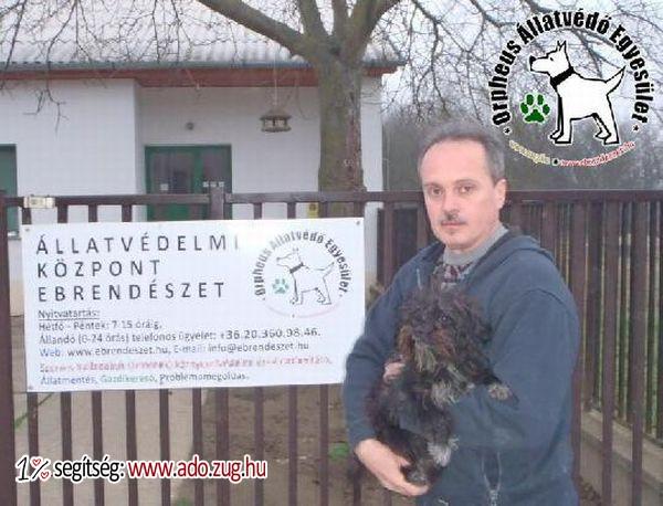 Állatmentés: Adója 1%-a révén megmentettük Rudi kutyust!