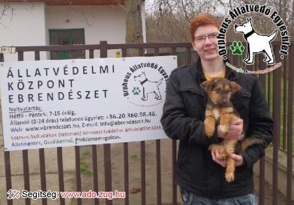 Állatmentés: Szerető Gazdinál Puppy
