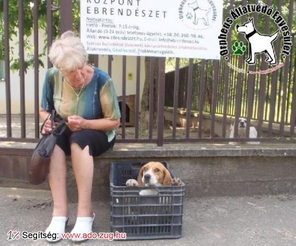 Állatmentés: megmentettük Begi kutyust!