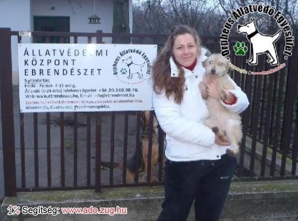 Dorka szerető Gazdihoz került!