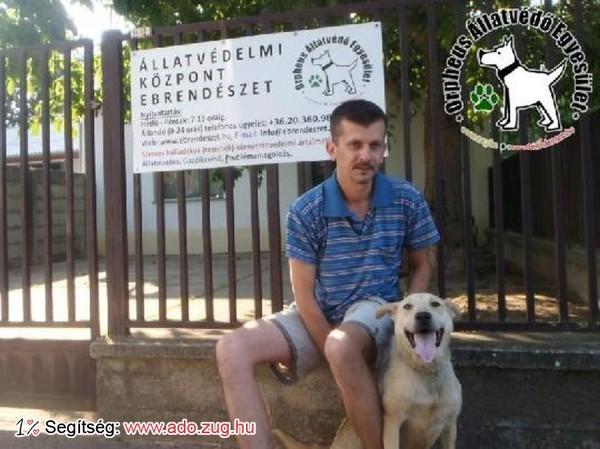 Kutyamentés: Aura új Gazdira lelt!