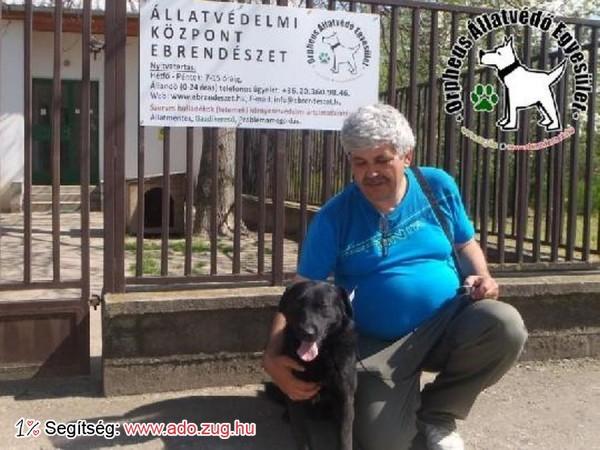 Kutyamentés: Gombóc szerető Gazdinál!