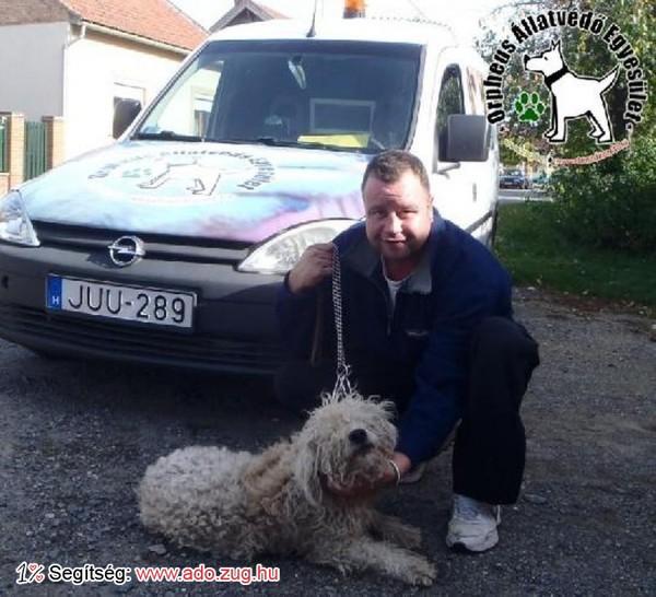 Megmentettük Csorba kutyust!