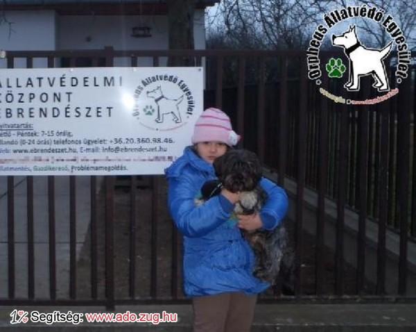 Megmentettük Tapi kutyust a felajánlott Szja 1%-oknak köszönhetően!