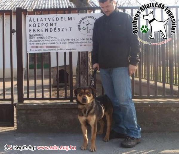 Szerető Gazdihoz került Csaba kutyus a felajánlott adóegyszázalékoknak köszönhetően!