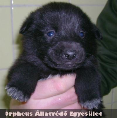 Állatbarátok Adó 1%-a segítségével tudtuk megmenteni ezt a kiskutyát Blackit!