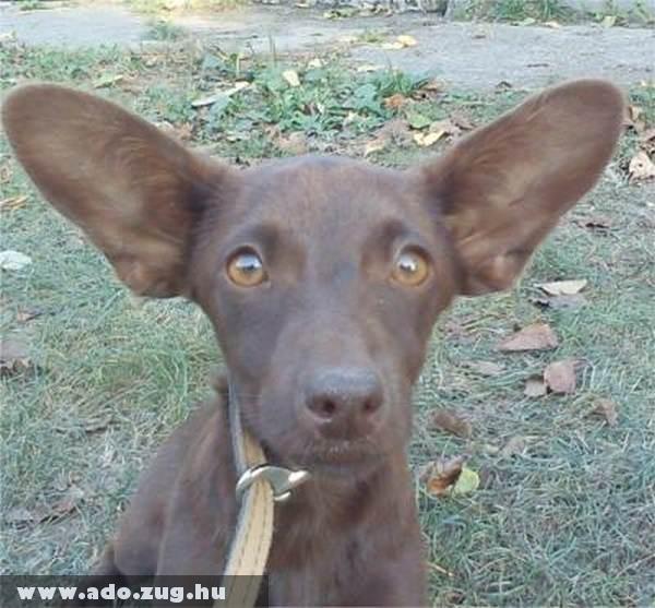 Zsumit az állatvédõk az adó 1% támogatás révén sikeresen mentették meg :)