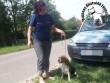 Megmentettük Bibó kutyust!