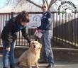 Az szja 1% felajánlásoknak köszönhetően megmentettük Dobó kutyust!