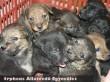 Adó 1% forintokból menekütek meg ezek a kiskutyák, az Orpheus Állatvédõ Egyesületnek köszönhetõen