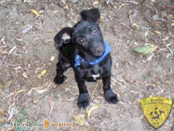 Dél-alföldi Állatvédelmi Őrszolgálat Alapítvány