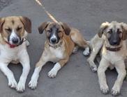 Hajdúszoboszlói Kutyabarátok Egyesület