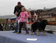 Misina Természet- és Állatvédő Egyesület