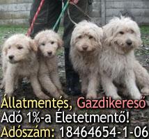 állatvédelem támogatás, adóegyszázalék, kutyaotthon, állatotthon