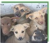 állatmenhely, állatvédő, adó egy százalék, adóbevalláskor, egyesület adószám