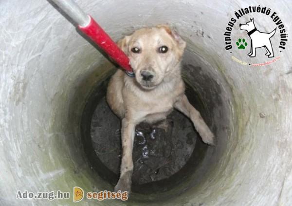 Állatmentés - Orpheus Állatvédő Egyesület