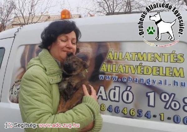 Állatmentés: Jisk szerető Gazdihoz került adója 1%-nak felajánlásával!