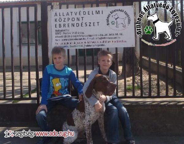 Az állatbarátok által felajánlott adó 1%-oknak köszönhetően Ácsi hazakerült Gazdijaihoz