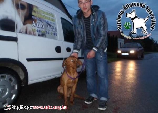 Kutyamentés: Rezső kutyust megmentettük!