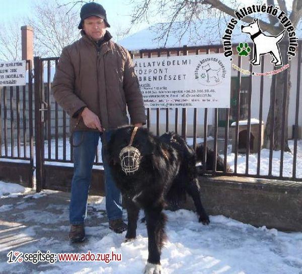 Rappai kutyus szerető Gazdihoz került az adó 1% felajánlások révén!