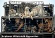 Az Orpheus Állatvédõ Egyesület sintérprevenciós kutyamentõ programja évek óta töretlen!