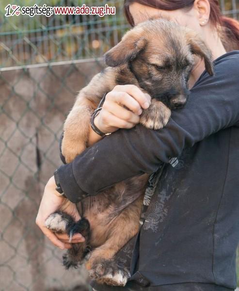 Szentendrei Árvácska Állatvédő Egyesület