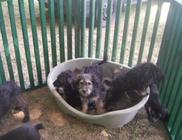 Kutyatár Természet- és Állatvédő Egyesület