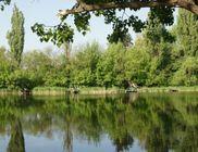 Tavirózsa Környezet- és Természetvédő Egyesület