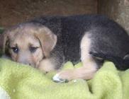 Állatvédők Vasi Egyesülete